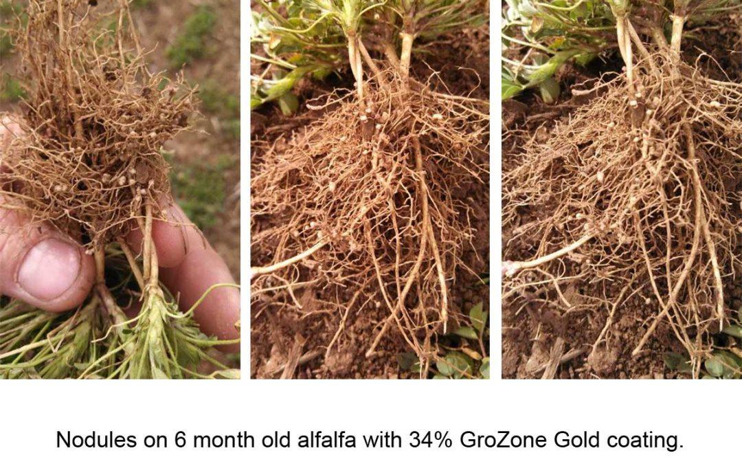 Fall Seeded Alfalfa