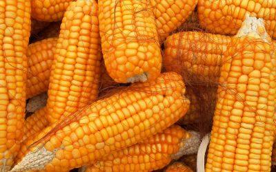VT Double PRO® RIB Complete® Corn Blend