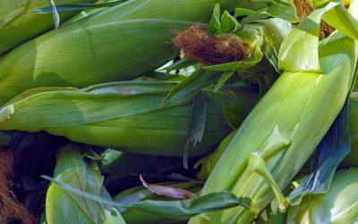 Genuity VT Triple PRO RIB Complete Corn