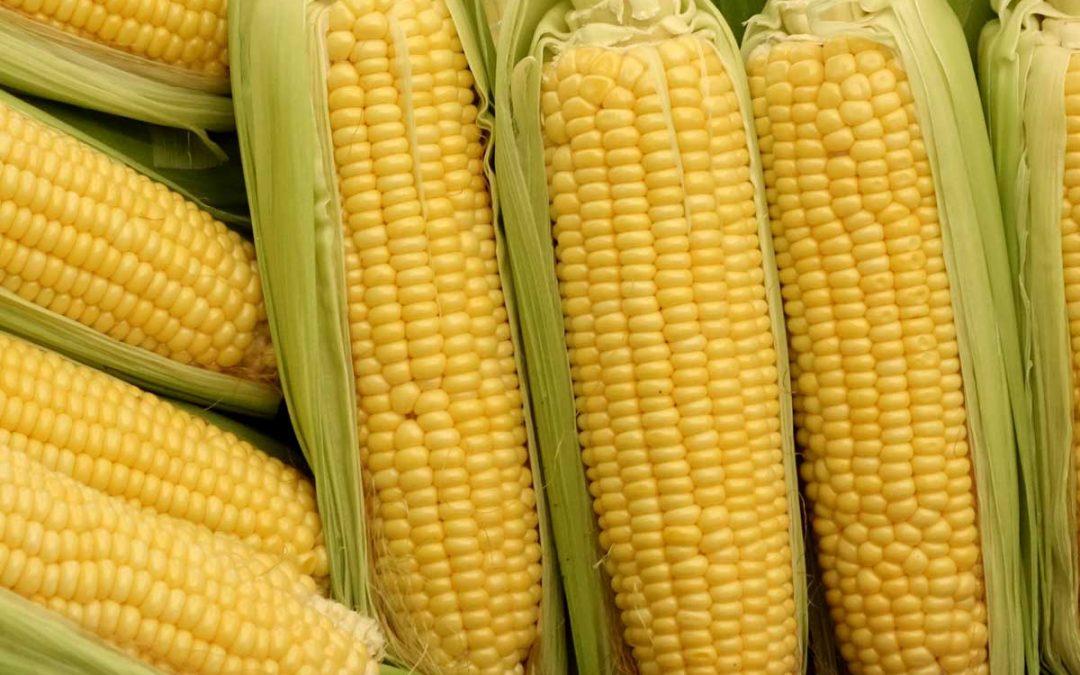 Trecepta® RIB Complete® Corn Blend